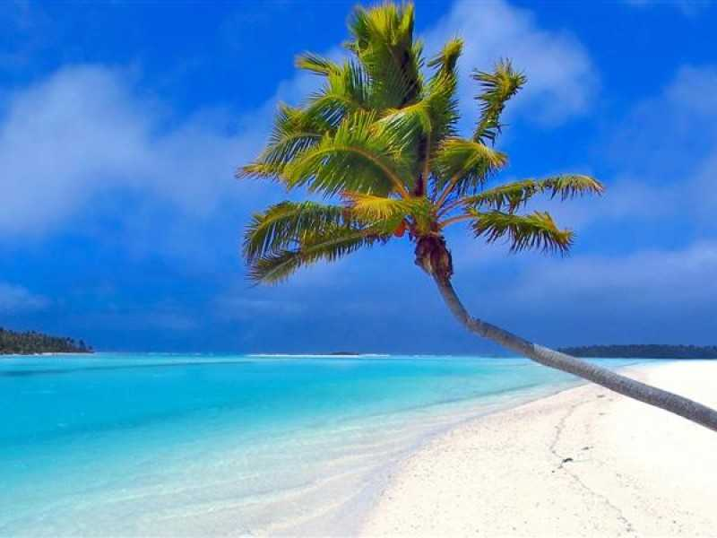 maldives_beach_palm_trees_sand_sea_1