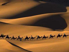 morocco_desert_camels_sahara