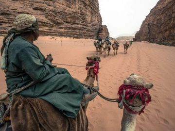roadtrip-jordan-camels-midle-east-cel-tours